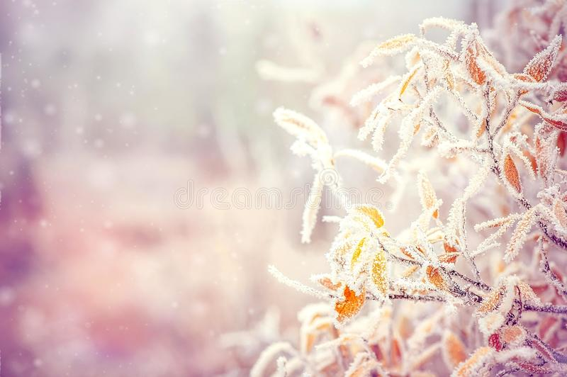 Winter Background with snow branches tree leaves. And snowflakes on background Holiday Christmas greeting card stock photography