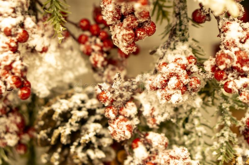Winter background with snow-covered mountain ash and spruce branch with cones. Spruce branches, fir cones and red royalty free stock photography