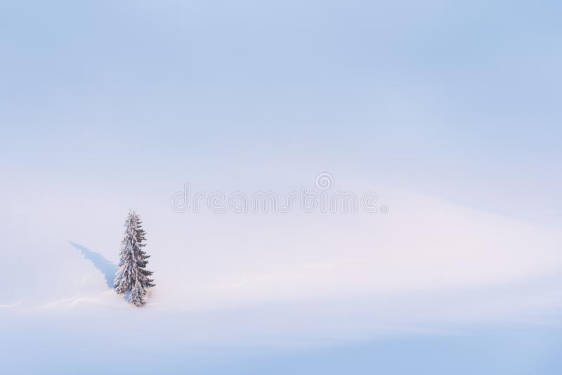 Winter background with snow and a lonely tree stock photo