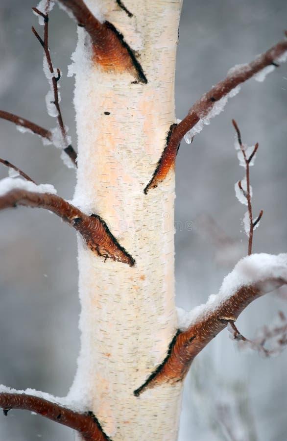Winter-Barke 2 lizenzfreies stockbild