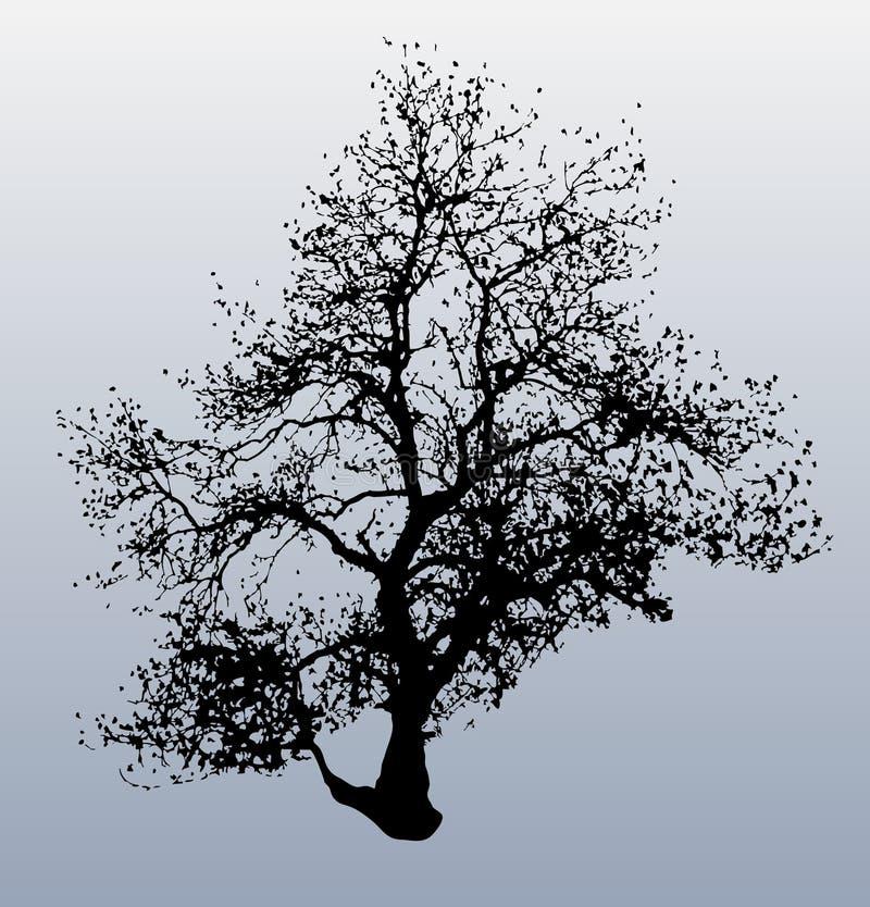 Winter-Baum stock abbildung