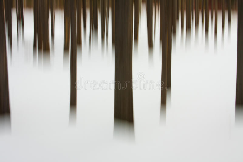 Winter-Baum-Auszug, Montana stockfotos