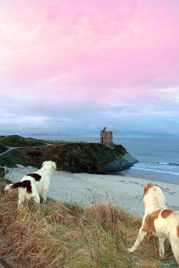 Download Winter Beach And Castle View With Dogs Stock Image - Image: 13542797