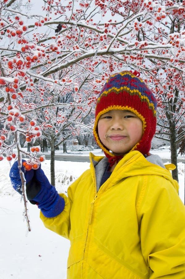 Winter-Beeren 3 stockbilder
