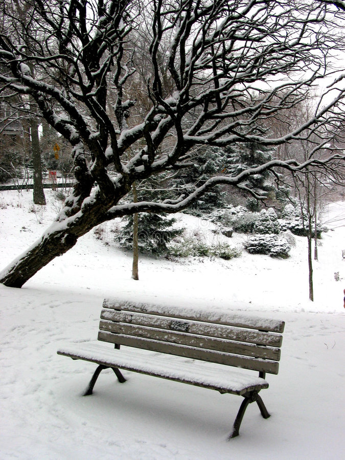 Download Winter bench 1 stock image. Image of tree, chilly, snowstorm - 524751