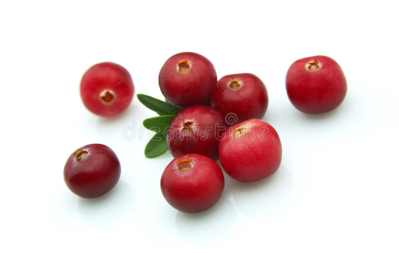 Winter berry - a cranberry royalty free stock images