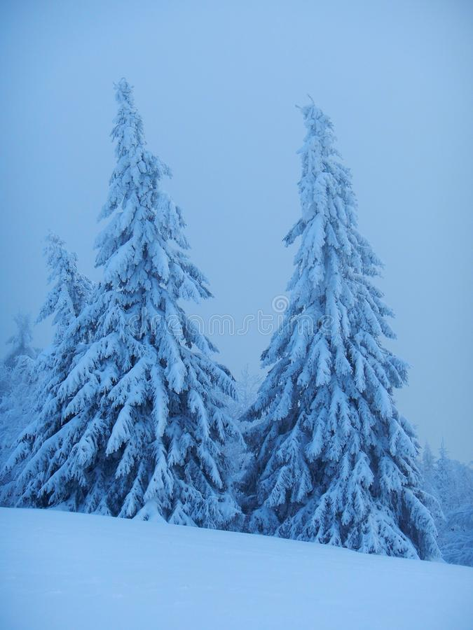 Winter in Beskydy royalty free stock images