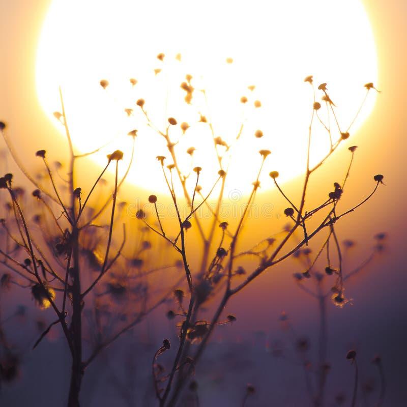 Winter-Betriebsschattenbild bei Sonnenuntergang lizenzfreie stockbilder