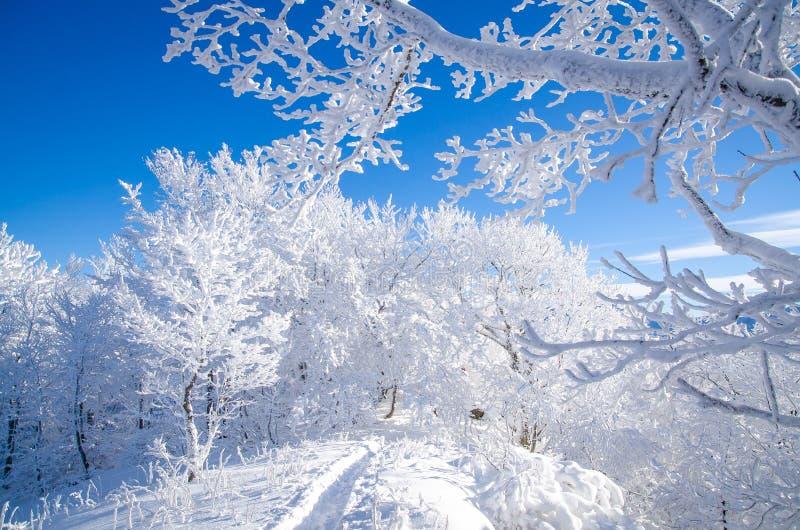 Winter in Bieszczady, Polen stockfoto
