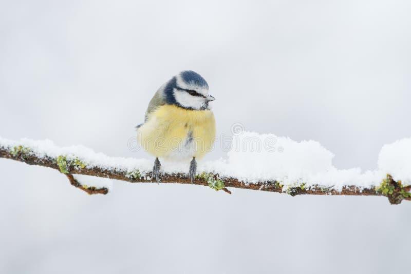 Download Winter bird stock photo. Image of nature, black, screen - 17552586