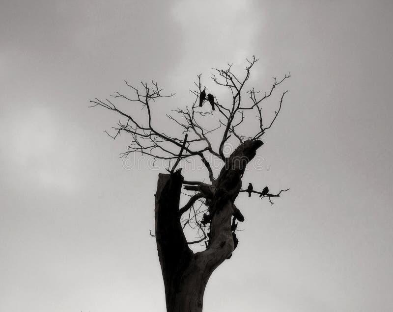 Winter birds stock photo