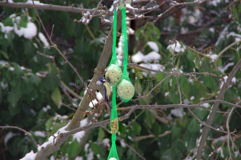 Winter birds feeding stock images