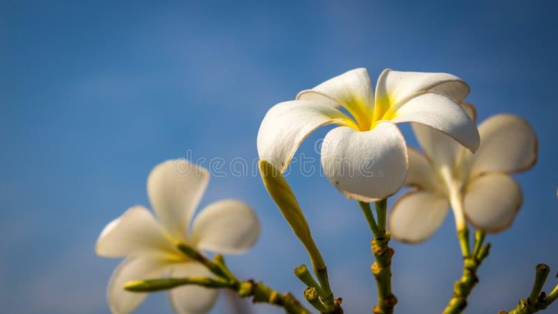Winter Blossom stock photos