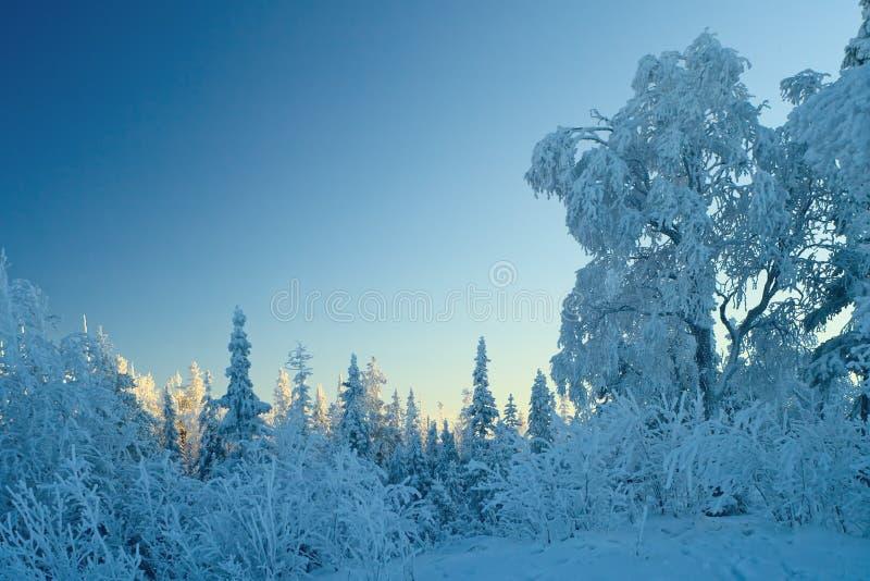Winter blue pastel landscape stock photo