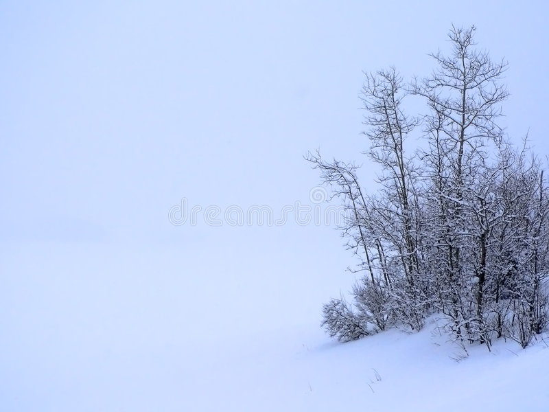 Download Winter Blues stock photo. Image of tranquility, blue, trees - 272038