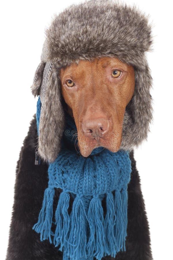 Winter Blues Royalty Free Stock Photos