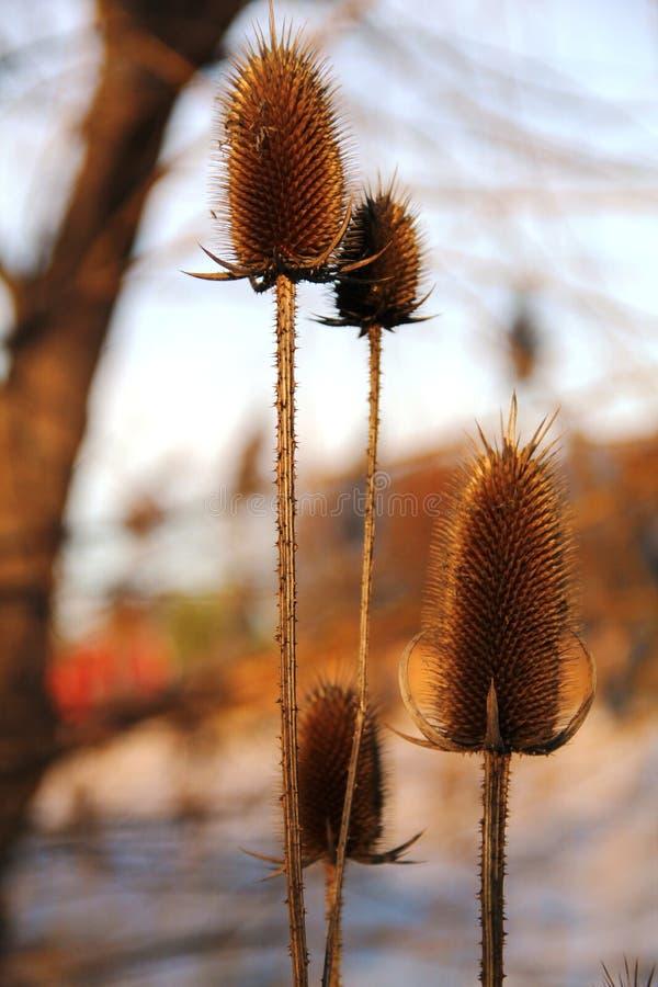 Winter-Blume lizenzfreies stockfoto