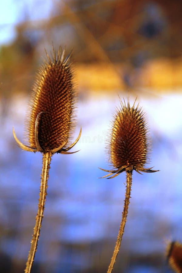 Winter-Blume lizenzfreie stockfotos