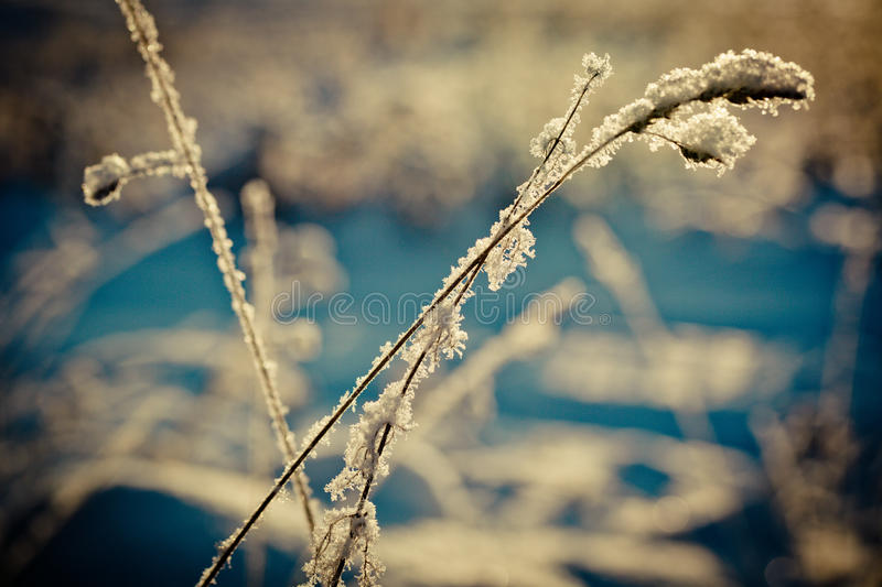 Winter branch covered with snow royalty free stock photo