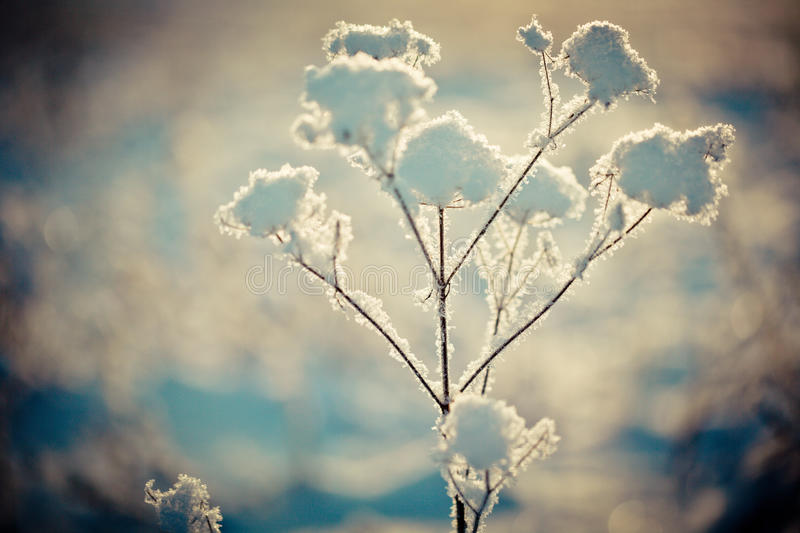 Winter branch covered with snow stock photography
