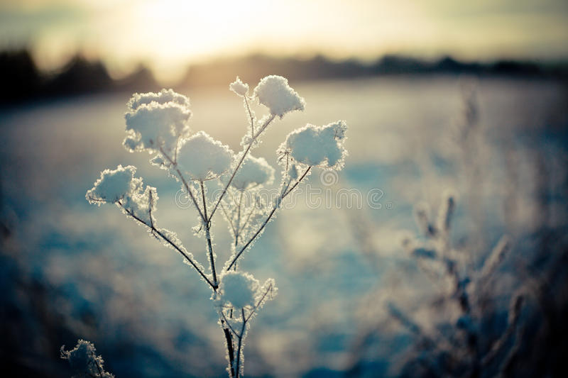 Winter branch covered with snow royalty free stock photography