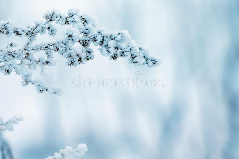 Winter, a branch of a dry plant covered with hoarfrost, to the r. Ight free place, a symbol of persistence and endurance royalty free stock photos