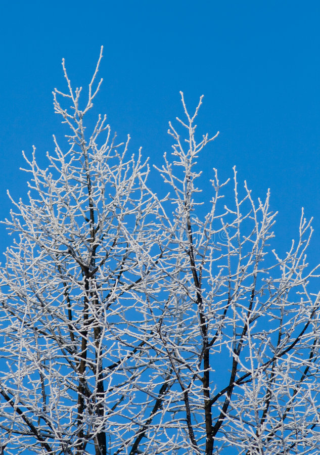 Free Winter Branches Royalty Free Stock Images - 4085179