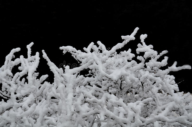 Download Winter branches stock photo. Image of snowy, tree, snow - 31064862