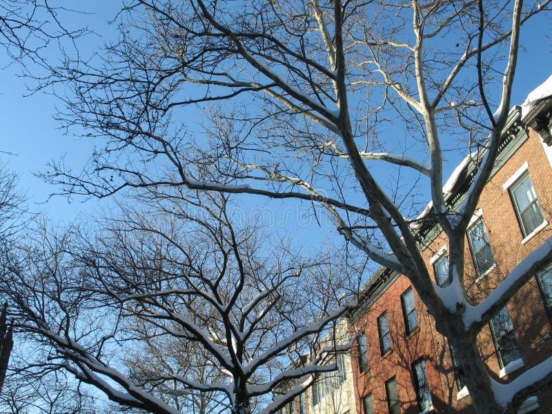 Winter in Brooklyn lizenzfreie stockfotos