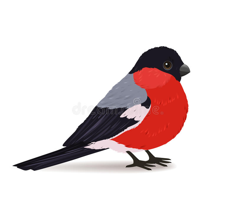 Winter bullfinch bird royalty free illustration