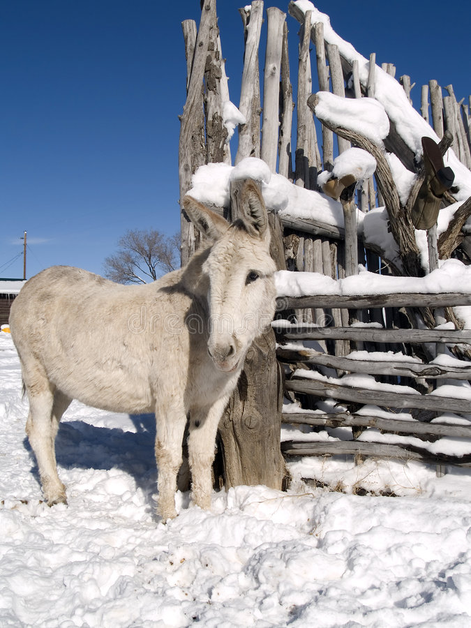 Winter burro royalty free stock images