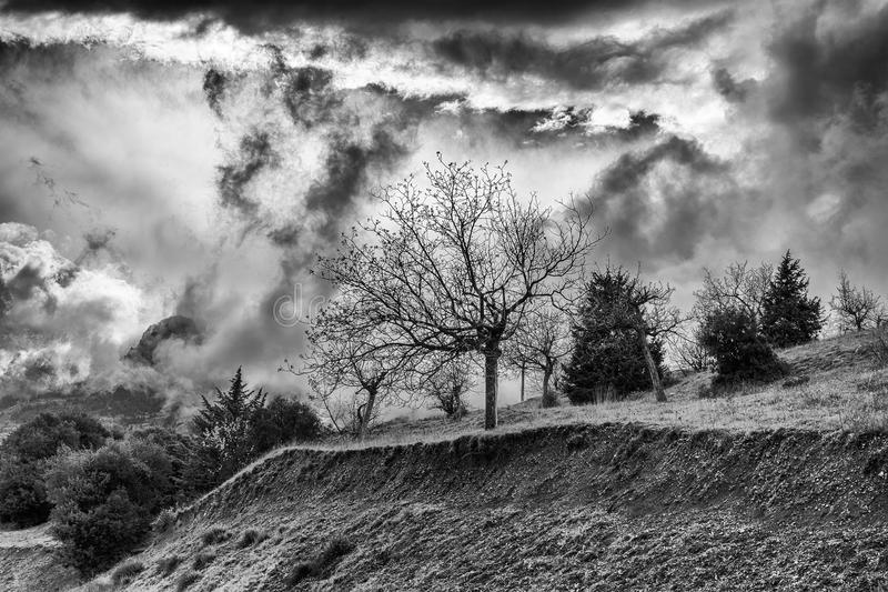Winter BW photo of cloudy dramatic sky with trees. Winter Black and White photo of cloudy dramatic sky with trees royalty free stock image