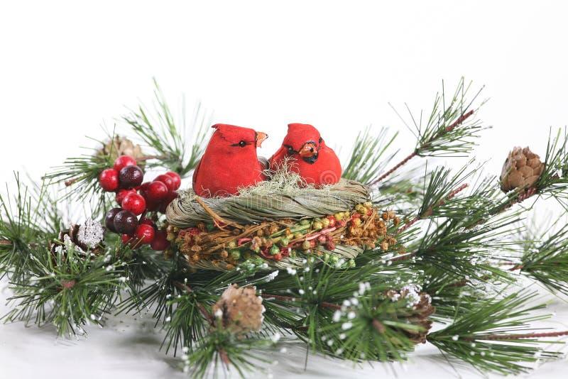 Winter Cardinals in Evergreen stock photos