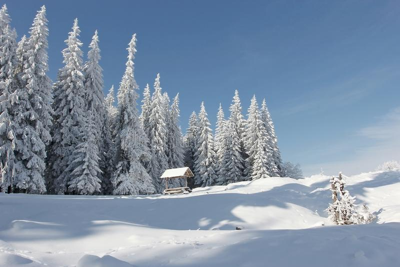 Winter Carpathian landscape royalty free stock image
