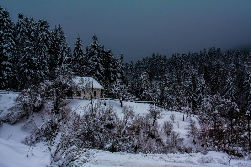 Winter in Carpathians royalty free stock images