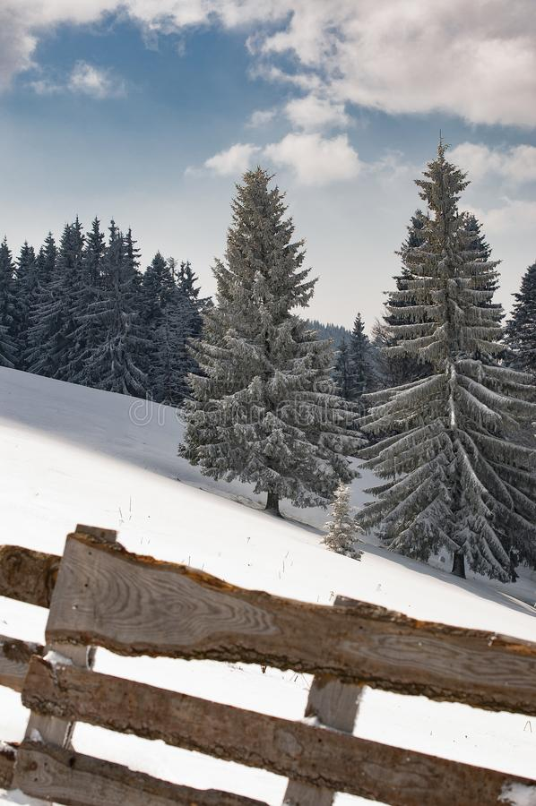 Winter carpati snow tree fence wood. Cold mountains holiday christmastree hill wallpaper romania nature travel stock photos