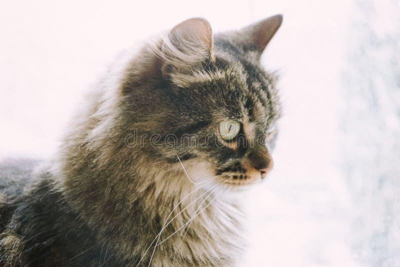 Winter cat stock photography