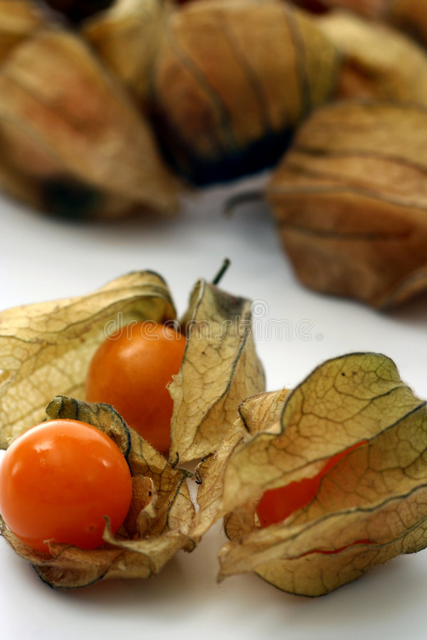 Download Winter Cherry isolated stock image. Image of culture, garnish - 3688085