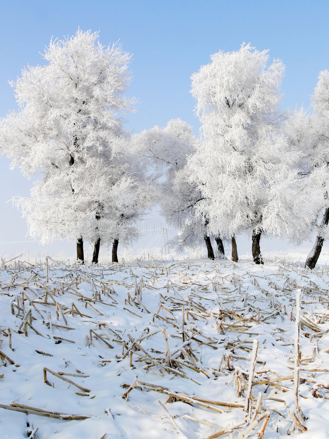 Winter in China, Wusong Island. Taken during winter on Wusong Island, China. Very cold, sometime -20 degree Celsius. Only crazy photographer will venture there stock photo