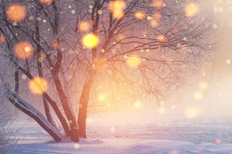 Winter Christmas background. Shining lights in frosty scene. Colorful snowflakes glowing on sunlight at sunset. Snowy winter. New Year time stock image