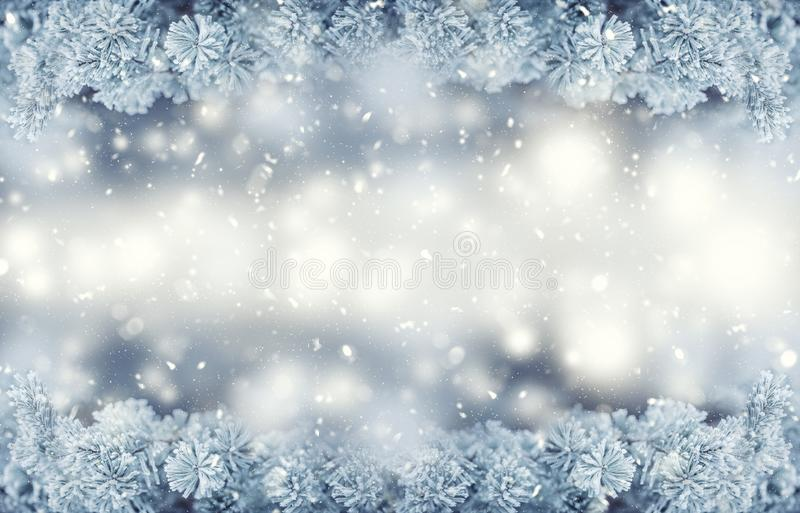 Winter and christmas border. Pine tree branches covered frost in snowy atmosphere royalty free stock images