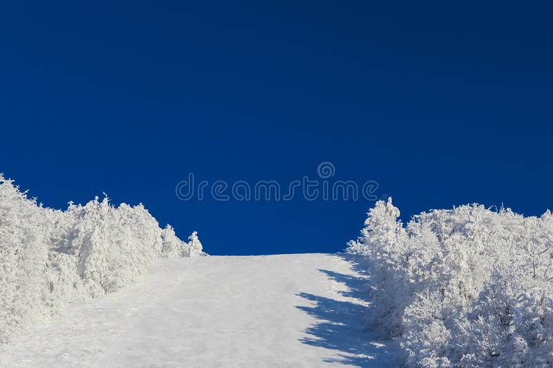 Winter christmas landscape on blue sky background with copy space. empty clear ski slope with white snow and white trees at the. Edges, outdoor recreation, the stock photography