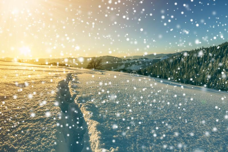 Winter Christmas landscape at dawn. Human footprint track path in crystal white deep snow through empty field, woody dark mountain. Range, large snowflakes on royalty free stock images