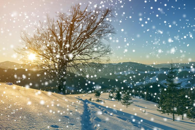 Winter Christmas landscape at dawn. Human footprint track path in crystal white deep snow, spruce forest, woody dark mountain. Range, large snowflakes on clear royalty free stock image