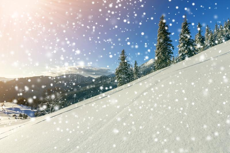 Winter Christmas landscape of mountain valley on frosty sunny day. Covered with frost tall fir-trees in deep snow, woody dark. Mountain ridge, soft glow on stock photos