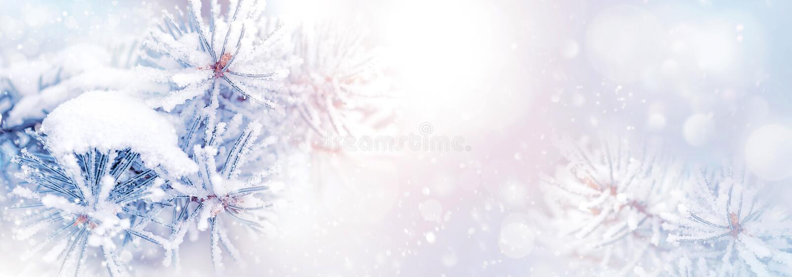 Winter christmas natural background. Pine branches in the snow in a beautiful snowy forest. Banner format. Copy space. Winter wond royalty free stock photography