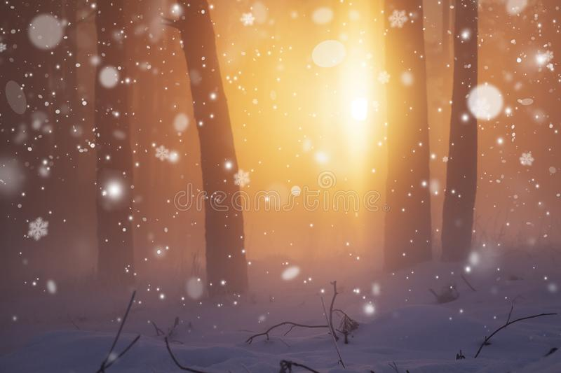 Winter Christmas nature background. Sunshine in winter forest. Snowfall in frosty and foggy forest stock photography