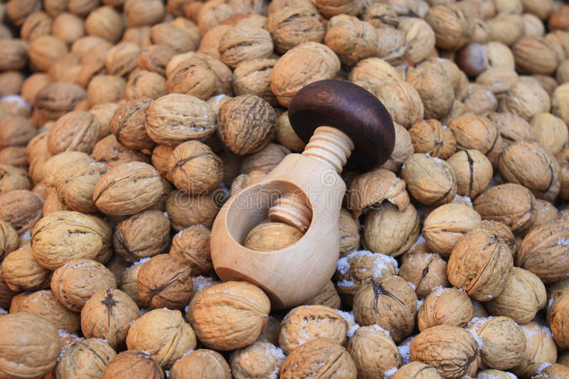 Winter circassian walnut