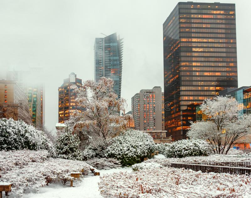 Winter city landscape with bushes and trees covered with snow an stock photos