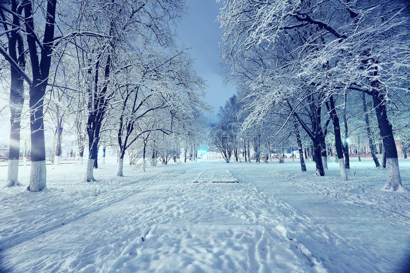 Winter city park. Night landscape in winter city park stock photography